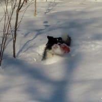 1月4日の犬森さん♪