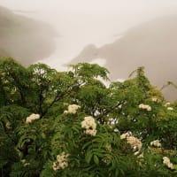 霧の晴れ間の サビバナナカマド