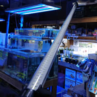 中古 ゼンスイ 120cm用LEDライト アンダーウォーターLED
