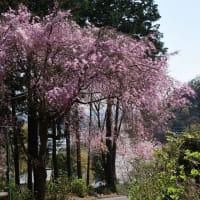晃石山から清水寺