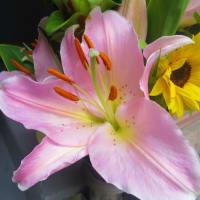 百合と紫陽花 ハイドランジア【Hydrangea macrophylla】◇紫陽花ゼリー作ってみました◆