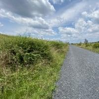 多摩川の黒い道(その2)