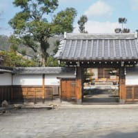 印空寺の熱海寒桜開花