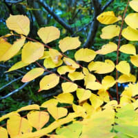 20-10.14blg:魚沼スカイラインの紅葉その一