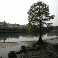 「ぬかるみの木」