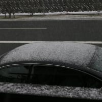 雪が降った