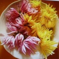 おばさんの料理教室 菊の花の酢の物