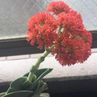 花が咲く(神刀)