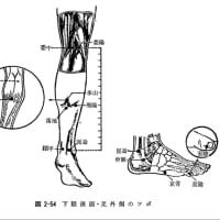 枇杷構造水/遠赤外線照射による末期癌腹膜播種疼痛・腹水の除去-VII