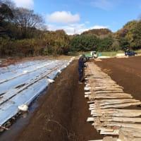 自然薯収穫風景|箱根自然薯の森 山薬