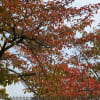 近所で見つけた秋