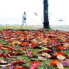 湖畔の落ち葉