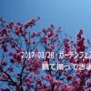 3月29日(木)晴、28日(水)晴、ガーデンネックレスフェアー横浜公園会場の一部を観て撮ってきました。