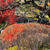 '14 錦秋の白鳥庭園
