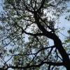 赤城自然園に行ってきました。森林セラピー~