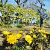 早春を彩る草花(赤塚植物園 2021.2.14 撮影)