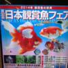 2014日本観賞魚フェア
