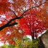 紅葉の龍洞院