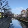 大岡川の桜 2021