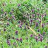 地味~に雑草! 道端やプランターに生きる春の野草