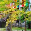 秋の京都 2(永観堂)