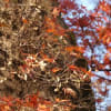 栃木県那須塩原市・大山公園(大山参道)の紅葉情報 第10週 2019.12.08 ②