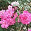花・はな・ハナ!…「寒川緑地」周辺の坂道