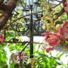 シェムリアップの木花