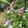 本土寺20120623