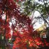佐白山の紅葉20201121②