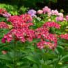 京都府立植物園 2009