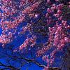 奥日光の四季 春