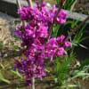 春の庭の様子とゼンマイ採取処理