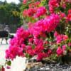 沖縄の人気観光地が入島料300円竹富島、全国初9月から土地買い戻し資金に