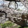 sakuraです