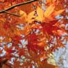 奥飛騨・福地温泉 秋の いろりの宿かつら木の郷