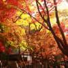 さいたま 平林寺の紅葉