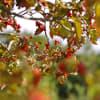 奈良 馬見丘陵公園 秋の草花 落ち葉