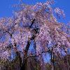 宇治植物園の春の花
