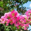 自然でカラダに嬉しいナチュラルコスメがくりーむパンのものだけ✨八天堂から登場【CoboH】◆