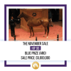 【2019 Fasig-Tipton The November Sale】が開催!(最高額馬はBLUE PRIZE)