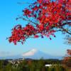 散り残る紅葉越しに観る朝の富士