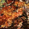 兵庫県 宍粟市 最上山公園の紅葉