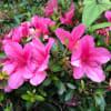 ジョギングコースの花(5/28)