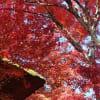 2018/11/26~28京都紅葉見物の旅は晴天に恵まれ感動しました