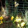 2月27日の花