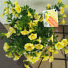 5/28 夏の寄せ植え鉢の花をゲット!