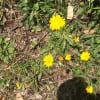 雑草の花(2)