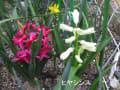 我が家の花、色付き始めました