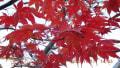晩秋の収穫と彫刻